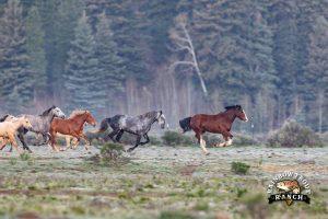 Rainblow Trout Ranch Colorado