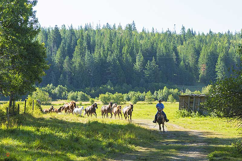 Western Pleasure Ranch